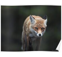 a fox in the wood Poster