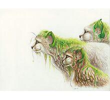 Of Vines & Fur Photographic Print