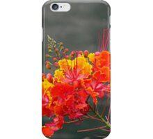 Mexican Desert Bird of Paradise iPhone Case/Skin