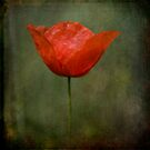 Simplicity by Kasia Fiszer