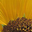 Emma's sunflower by goofygirl1977