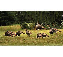 Talking Turkey Photographic Print