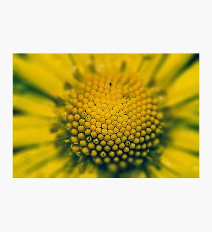 Macro Photographic Print