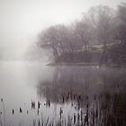 Loughrigg Tarn by Cate Davies