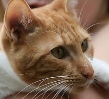 Close up wiskers  by lulisa