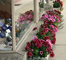 window shopping by Lynne Prestebak