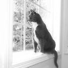Cat in the Window by susan stone