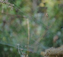 Web by Georgy Dhanjal