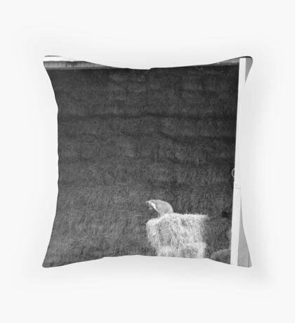 Farm Cat Throw Pillow