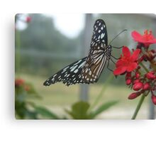 Glasswing Beauty Canvas Print