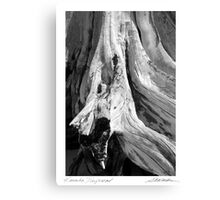 Kanaha Driftwood Canvas Print