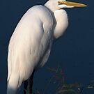 Great Egret - Morning Light by Dennis Stewart