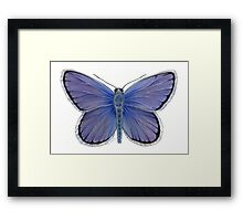 Karner Blue Butterfly Framed Print