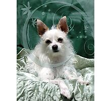 Miss Maggie May Photographic Print