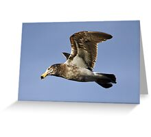 Pacific Gull at Lorne Greeting Card