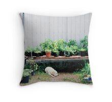 Farmstand - Mont-Saint-Hilaire, Quebec Throw Pillow