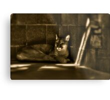 Another Melancholy Cat Metal Print