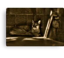 Another Melancholy Cat Canvas Print