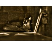 Another Melancholy Cat Photographic Print
