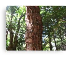 Is this tree smiling at me or what.....  Canvas Print