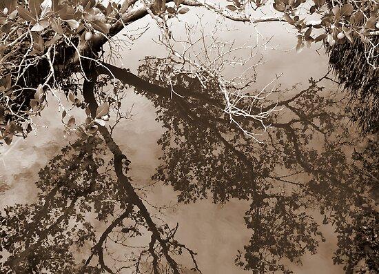Mangroves by Kitsmumma