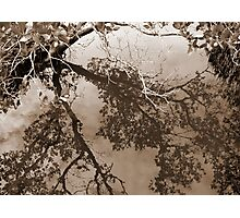 Mangroves Photographic Print