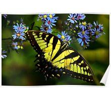 Giant Yellow Swallowtail  Poster