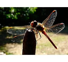 transparent wings Photographic Print