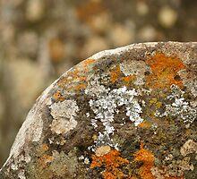 On the Rocks by Tiffany Dryburgh