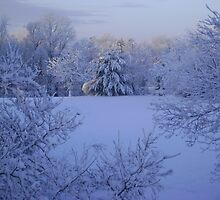 Peaceful Winter Morning by Jaclyn Hughes