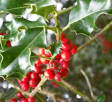 Holly berries by NikkiMatthews