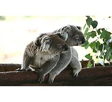 2 koalas together looking at the same place Photographic Print