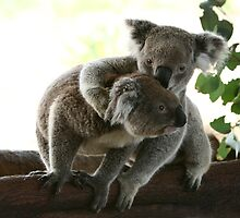 2 koalas on a tree by yelys