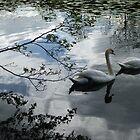Shady Swans by Sue Gurney