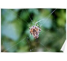 The spider weaves its web Poster