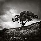 A tree by Kostas Pavlis