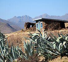 House of Aloe by Lauren Barkume
