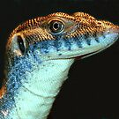 Mertens Water Monitor by Tom Newman