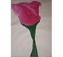 pink rose Photographic Print