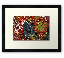 Ca'Bruzzo Vineyard Framed Print