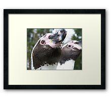 Penguins Framed Print
