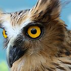 Indonesia  5 - Malay Fish Owl by Normf