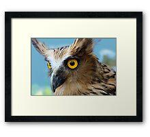 Indonesia  5 - Malay Fish Owl Framed Print
