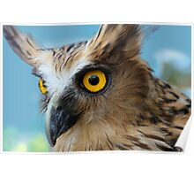 Indonesia  5 - Malay Fish Owl Poster