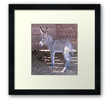 Less Than 24 Hours Old Framed Print