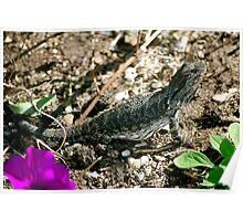 Basking Lizard Poster