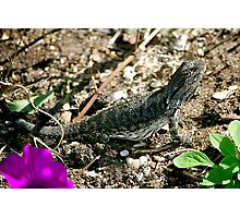 Basking Lizard Photographic Print