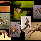 Huntsman Spiders by WeblightStudio