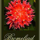 Bromeliad by WeblightStudio
