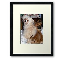 Brothers of a different mother......... Framed Print